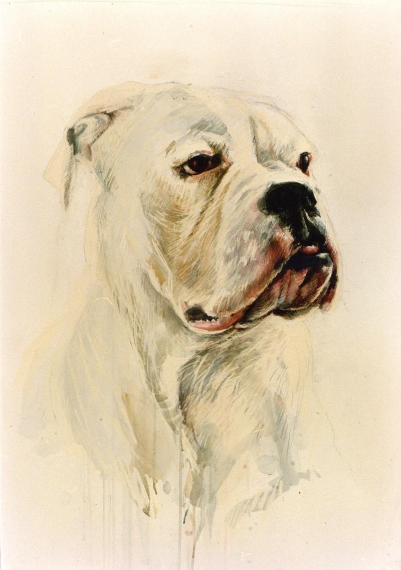hondenportret tekening gemengde techniek
