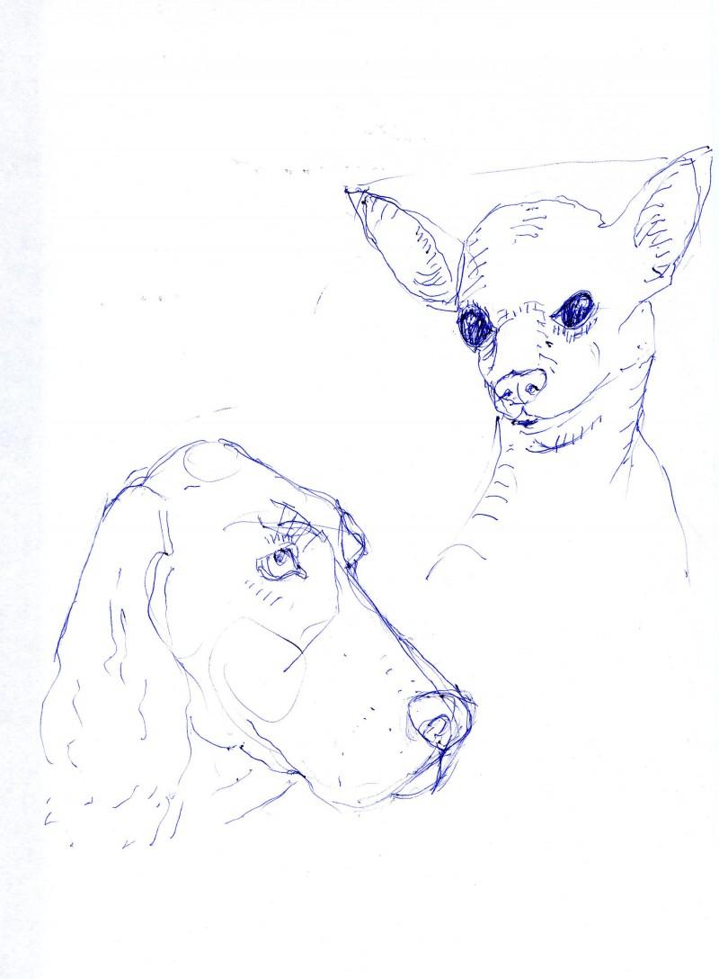 hondenportret schets balpen