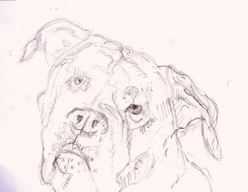 hondenportret schets potlood