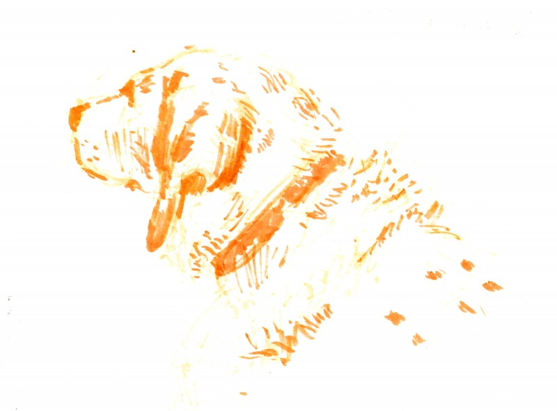 hondenportret schets