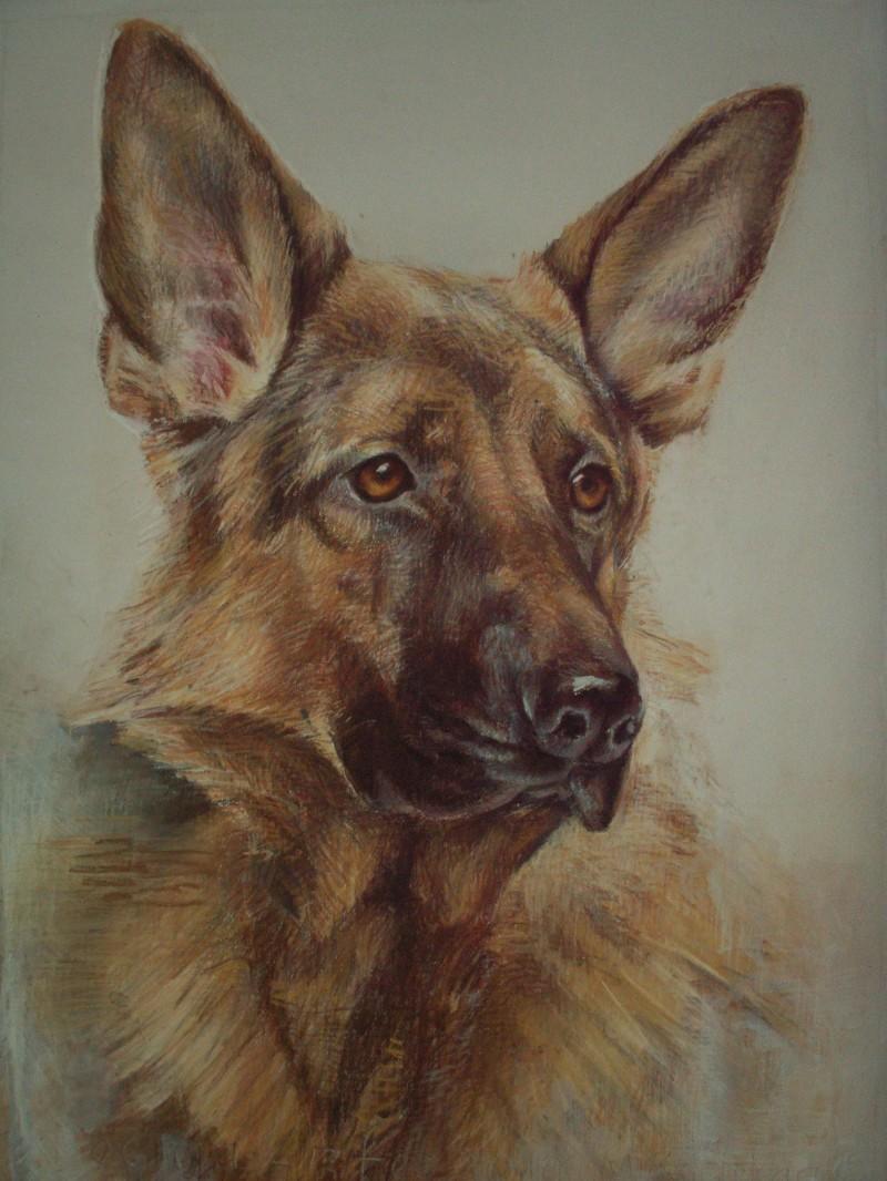 portret duitse herder tekening