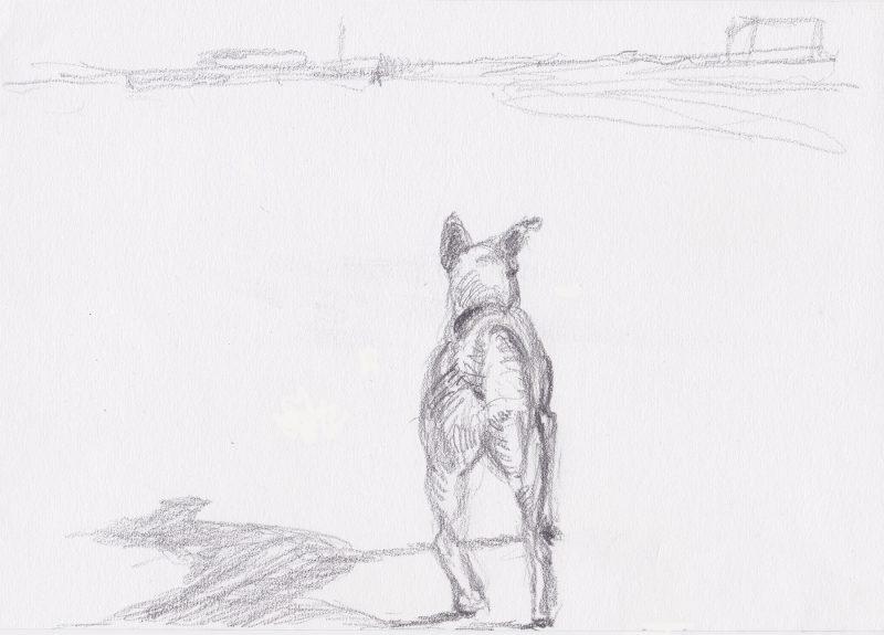 hond tekening