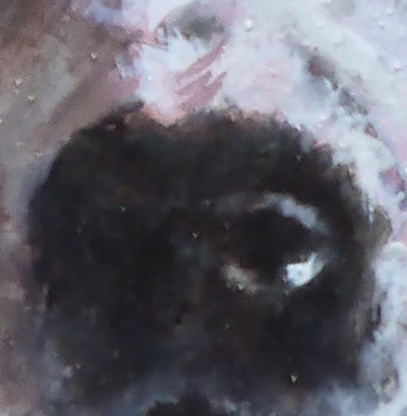 dierportret